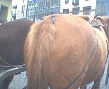 Arsch pferde Beste Anal