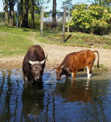 Zoo Arnheim