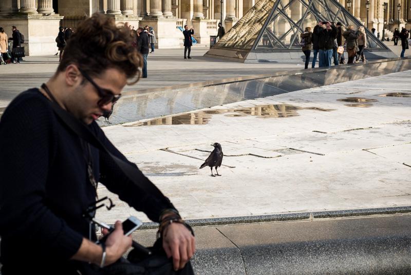Rabe vor dem Louvre