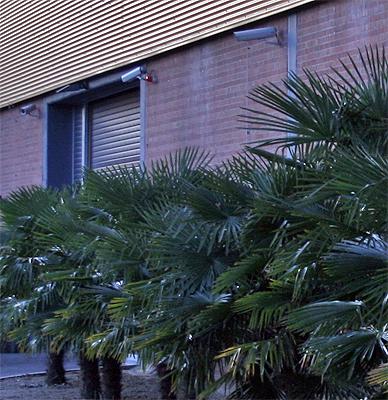 man muss was tun, gegen die gemeinen palmendiebe...