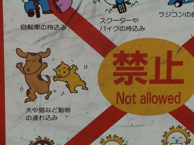 no dancing for cats and dogs