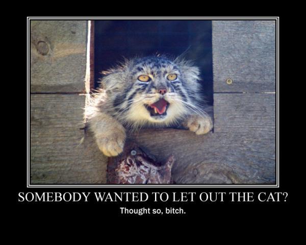 garden cat deterrent reviews