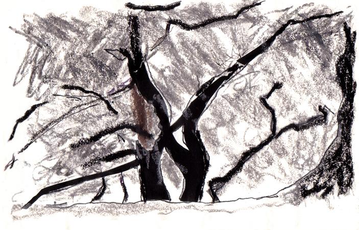 Bäume am Sonntag