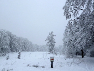 1/2 Tag Winter