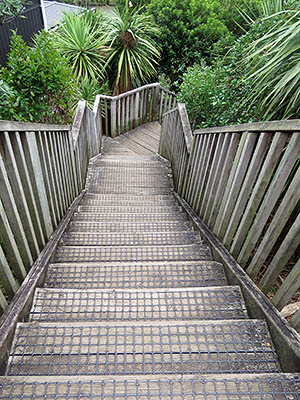 Orakei Basin Walkway - Meadowbank Road - Auckland - New Zealand - 13 February 2017 - 12:13