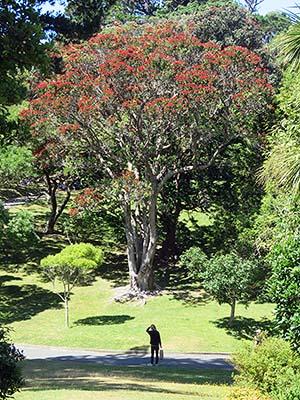 Botanic Gardens - Wellington - New Zealand - 9 January 2020 - 15:33