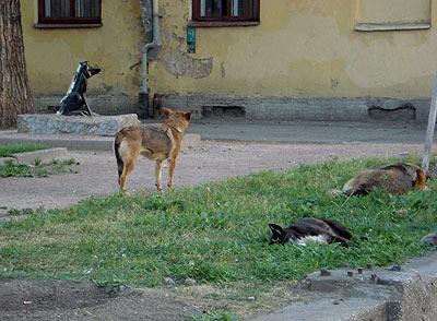Hundeparadies