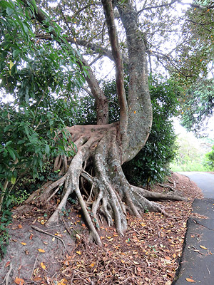 Chelsea Heritage Park to Kauri Point Reserve - Birkenhead - Auckland - New Zealand - 26 December 2016 - 18:29