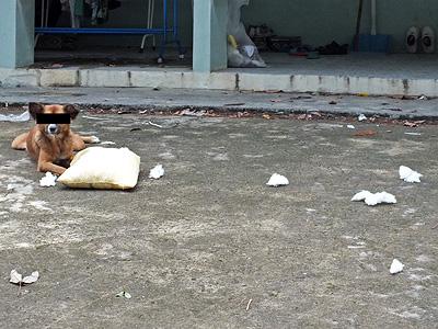Soi Pasak 8 - Thalang - Phuket - 3 July 2013 - 10:12