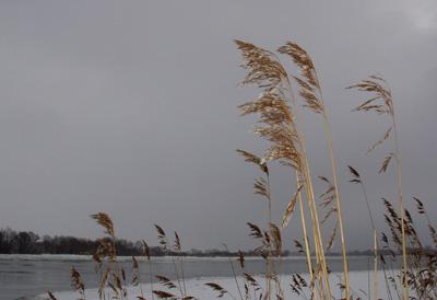 Elbe bei Bleckede