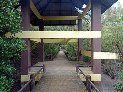 Mangrove Walk - Saphan Hin - Phuket - 13 October 2013 - 7:36