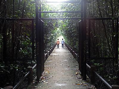 Mangrove Walk - Saphan Hin - Phuket - 13 October 2013 - 7:24
