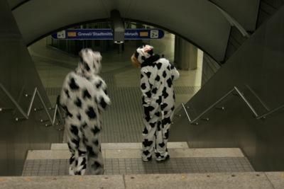 Möllerbrücke:Tiere in der Stadt