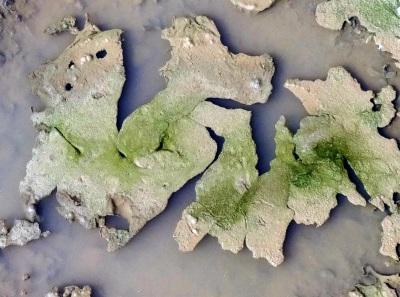 Quelle: tektonische platten_00063.jpg