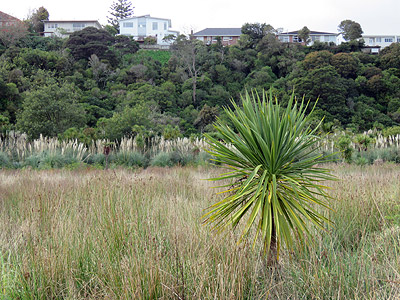 Onepoto Domain - Auckland - New Zealand - 27 July 2016 - 11:13