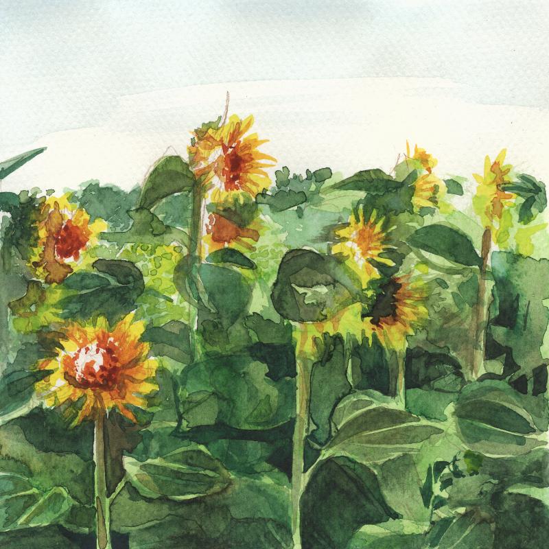 Sonnenblumen in der Morgensonne