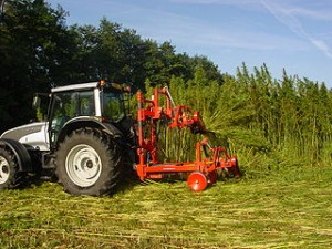 Hemp harvesting in France