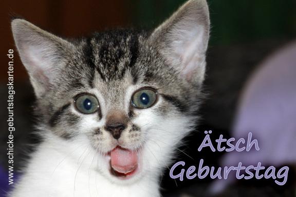Stichwort Katzenfoto