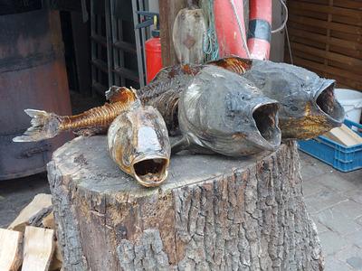 Marmorkarpfen