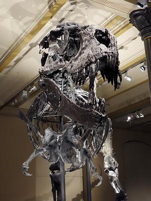 herr rex, tristan otto rex