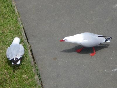 beware of the seagulls ... sagte die Fish ´n Chips Verkäuferin