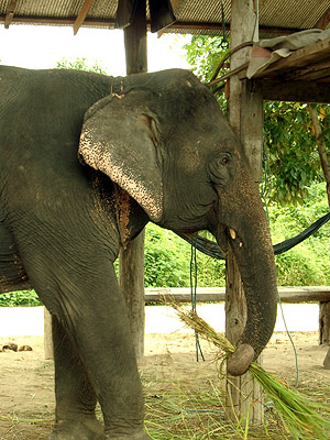 North of Chiang Mai - Thailand - 10 August 2003 - 10:54