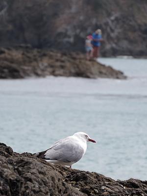 Matapouri - New Zealand - 31 December 2015 - 16:52