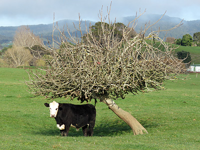 East Coast Road - Whakatiwai - Firth of Thames - New Zealand - 1 September 2016 - 8:36