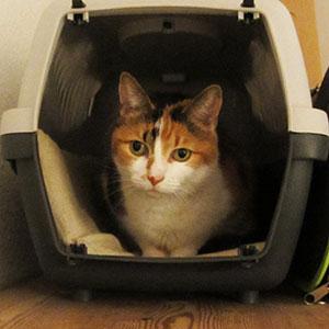 Meine Katze, die gern in ihrem Transportkoffer sitzt (solange dieser auf dem Schrank steht)