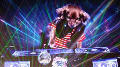 DJ Doggy, 'Monkey' in the mix