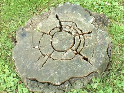 ein Baumstamm mit dem Logo von Selfhtml
