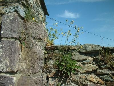 Altzella, Klostermauer