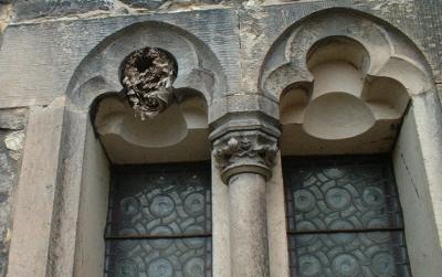 Wespennest oder Hornissennest im neuromanischen Fenster an der Briesnitzer Kirche