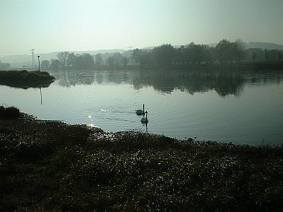 Schwäne im Morgennebel, Elbe bei Kötitz