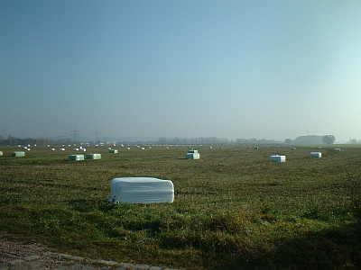 Plastikwürfel auf den Elbwiesen