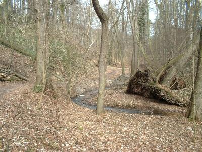 nur wenige entwurzelte Bäume erinnern noch an vergangene Hochwaserkatastrophen