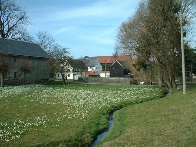 Märzenbecherwiese in Lauterbach