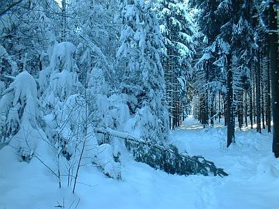 Schneebruch in der Dippoldiswalder Heide