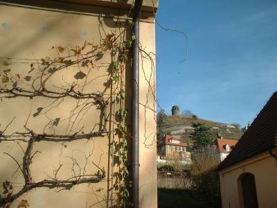 Radebeul, Hoflößnitz, Blick zum Bismarckturm