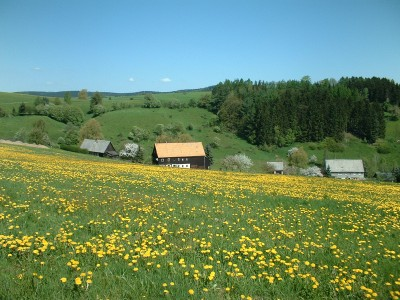 Wiese mit Löwenzahn in Hinterhermsdorf, Neudorf