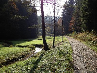 Im Weissbachtal bei Hinterhermsdorf