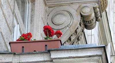 Blumen in Budapest.